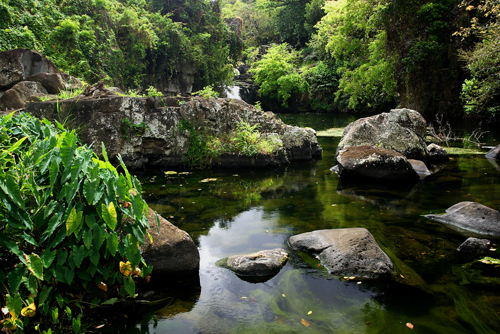 Top of the 5 best nature activities in Mauritius